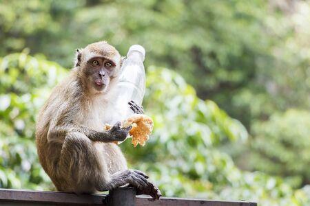 Mischievous Monkey holding stolen items
