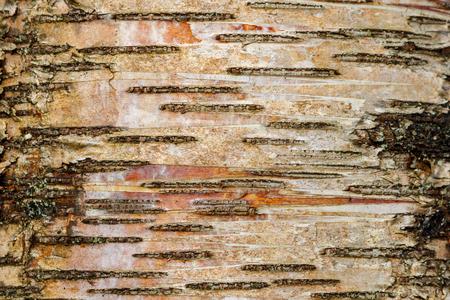 Abstract Wood Tree Bark Background Landscape Orientation Reklamní fotografie