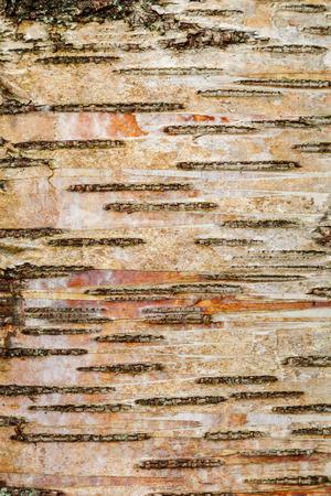 Abstract Wood Tree Bark Background Portrait Orientation