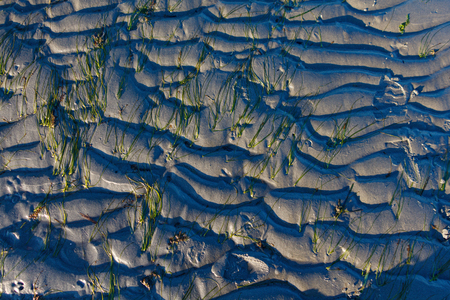 Abstract Background Wavy Sand and Seaweed in Sun