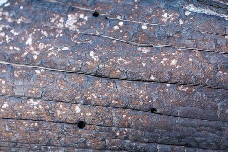 Black Charred Burned Wood tree Background Texture