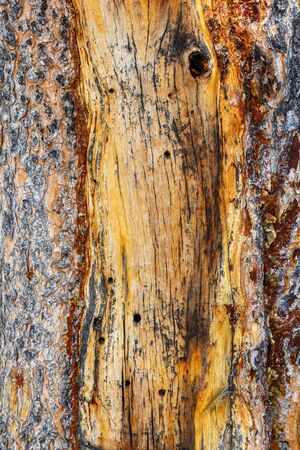 Yellow Brown Stripped Damaged Wood Background Texture