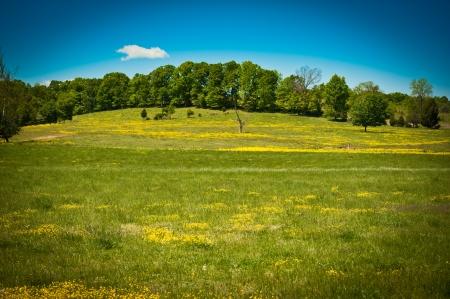 Rolling hills in summertime in central Tennessee, USA  Reklamní fotografie