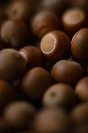 acorns: A group of acorns. Stock Photo