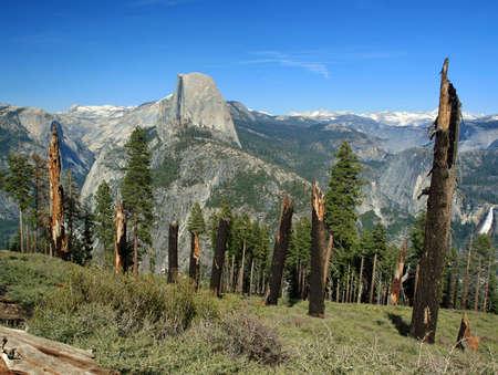 Blast radius, Group of struck down trees, Panorama trail, yosemite national park, california Stock Photo - 10877193