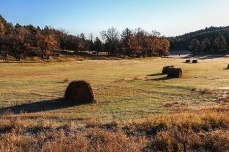 hayroll: golden hayfield in sunrise fall south dakota