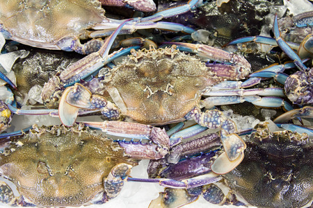 blue swimmer crab: Fresh raw flower crab or blue crab in sedfood market