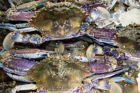 blue swimmer crab: Fresh raw flower crab or blue crab in sedfood market