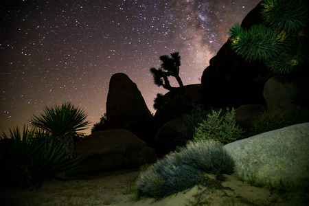 joshua: night of stars, Joshua Tree national park california