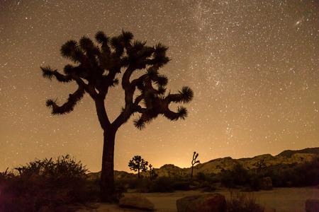 joshua: night of stars, Joshua Tree national park california