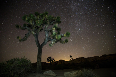 joshua tree national park: night of stars, Joshua Tree national park california