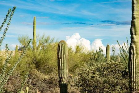 tonto national forest: Catalina Mountain State Park near Tucson saguaro national park