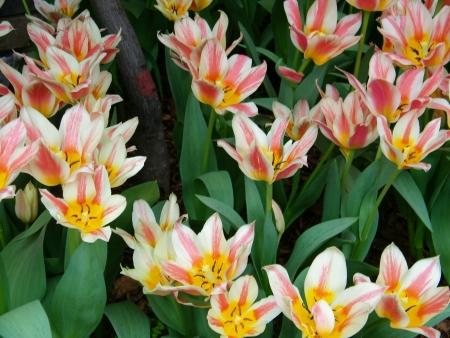 conservatory: Conservatory Flowers