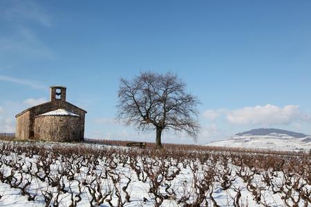oenology: Beaujolais landscape in winter