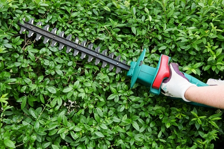 outside machines: Trimming garden hedge