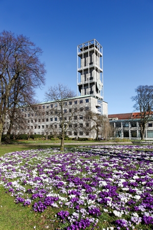 City hall of Aarhus with crocus in foreground