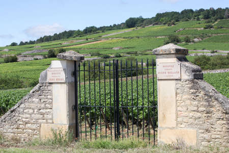 Chassagne-Montrachet, France - July 5, 2020: Domaine Roger Belland vineyard. Domaine Roger Belland is a Grand Cru montrachet for white wine from chardonnay in the Cote de Beaune subregion of Burgundy Éditoriale
