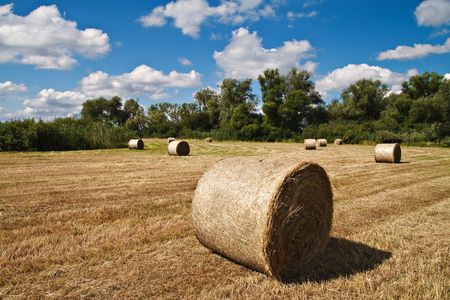 Bales of straw on a field in the light of a sunny day. Stock Photo