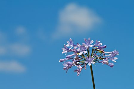 A flower and a blue sky. Stock Photo