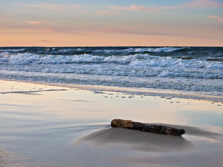 Drift wood on shore of the Baltic Sea. photo