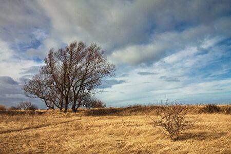 noun: Dune landscape on shore of the Baltic Sea  Stock Photo