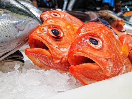 Fresh fish in a fish market  photo
