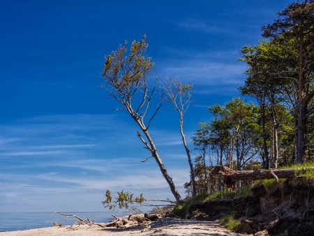 On the Baltic Sea coast  Stock Photo