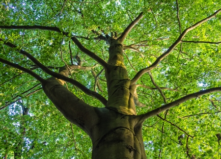 A tree with green leaves  Stock Photo