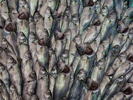 viands: Fishes on a market in Istanbul  Turkey