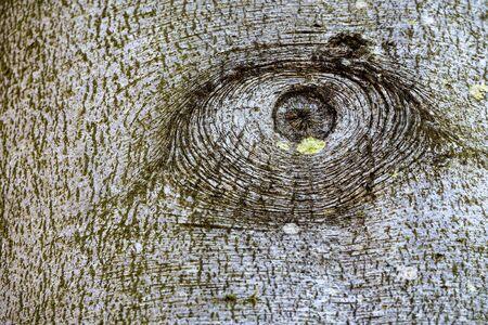 knothole: Knothole of a tree