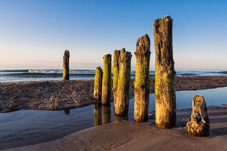 groyne: Groyne on shore of the Baltic Sea