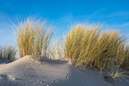 Dune on the Baltic Sea coast.