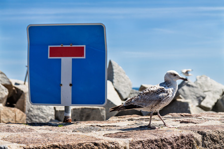 Sea gull and traffic sign on the mole in Sassnitz (Germany). photo