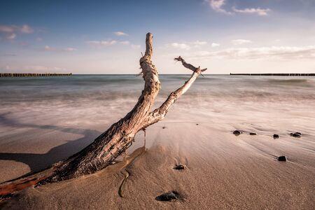 baltic sea: Trunk on shore of the Baltic Sea