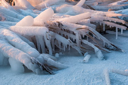 icicled: Frozen reeds on a river in winter. Stock Photo