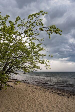 baltic sea: Tree on shore of the Baltic Sea. Stock Photo