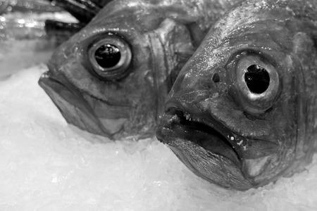 produits alimentaires: Fresh fish on a market.