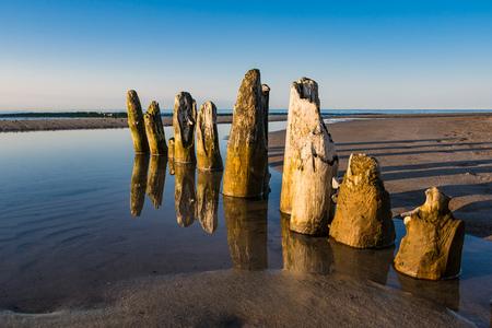 groynes: Groyne on shore of the Baltic Sea.