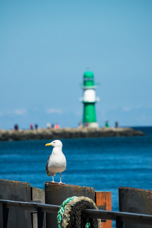 The Mole and a sea gull in Warnemuende, Germany.