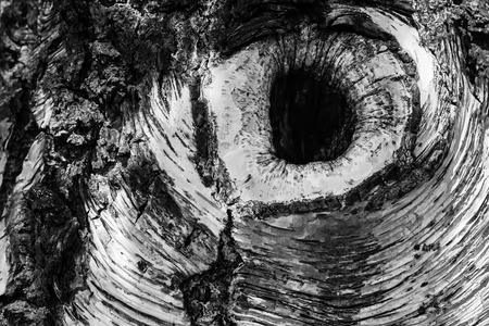 A knothole in a tree trunk in monochrome. Stock Photo