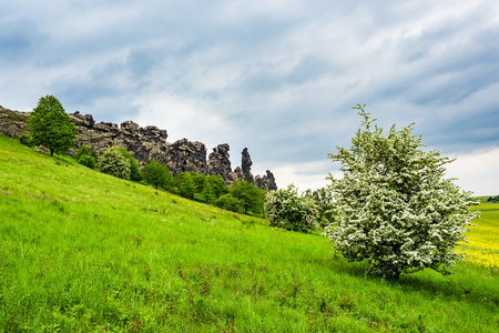 Landscape with trees in the Harz area, Germany.
