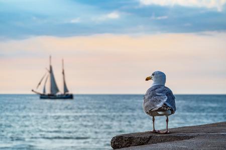 Segelschiff und Möwe auf der Ostsee in Warnemünde, Deutschland.