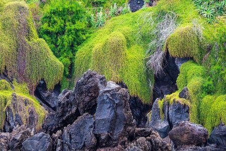 Rocks in Porto Moniz on the island Madeira, Portugal.