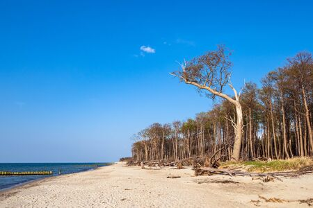 Landscape on shore of the Baltic Sea in Graal Mueritz, Germany. Stock Photo