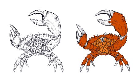 crab vector illustration with vintage style outline