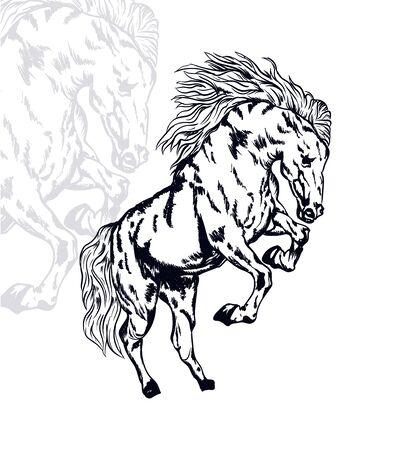 horse vector illustration, editable and detailed Иллюстрация