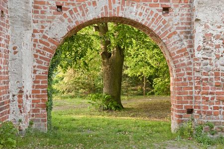 Archway in a cloister with an old tree in background