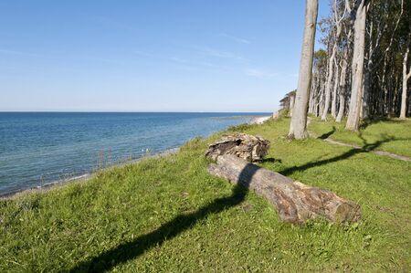 boles: Forest on shore