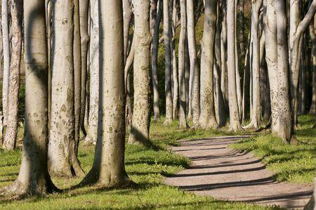 boles: Forest in sunlight
