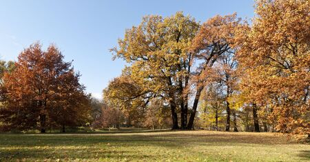 Trees with colored leaves in autumn Stock Photo